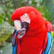 Sociedade de Ornitologia Pacheco